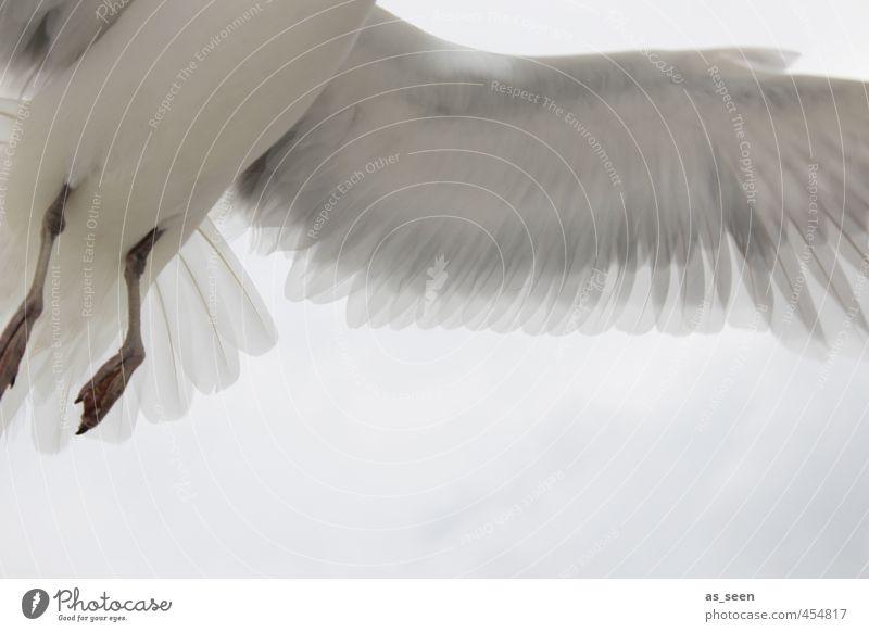 Intimes Detail weiß rot Tier Freiheit grau braun fliegen Kraft Geschwindigkeit Vergänglichkeit einzigartig Ostsee Nordsee hängen