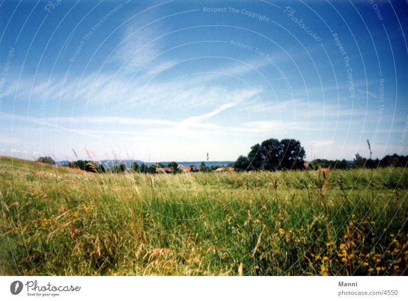 Wiese Himmel Wiese Gras