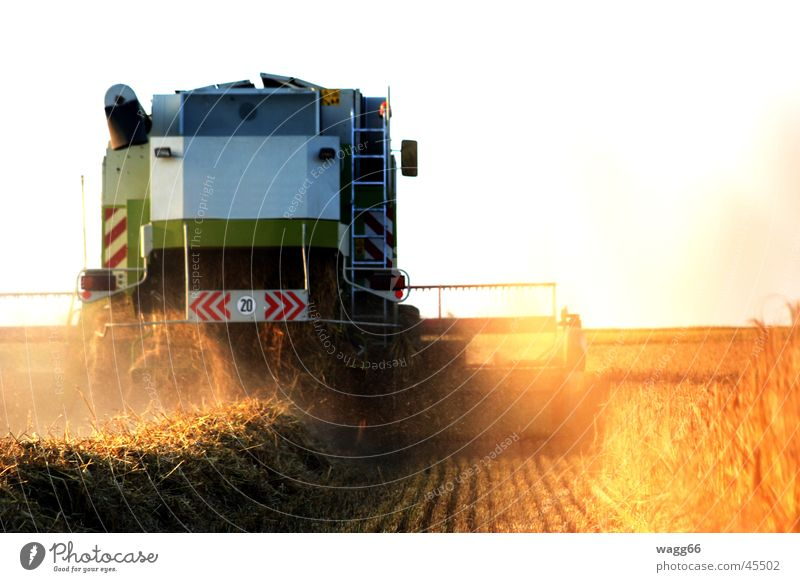 Harvest Time weiß Landwirtschaft Getreide Ernte Einsatz