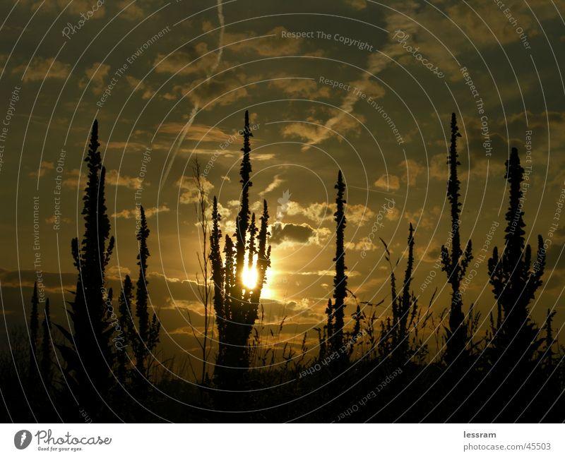 Feldabendsonne Abend Abendsonne Dämmerung Wolken Sonnenuntergang Abenddämmerung Qumolus