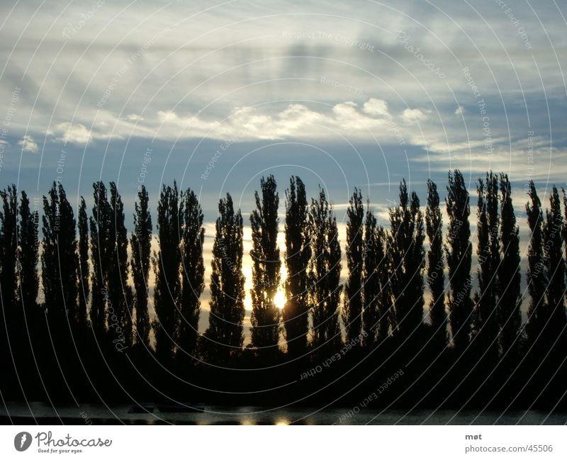 trees Himmel Baum Sonne blau Wolken Harz Pinie Baumreihe