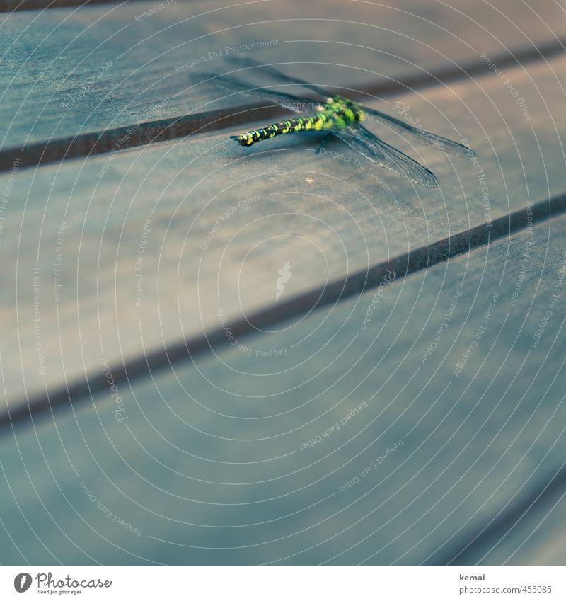 Verirrt Tier Wildtier Insekt Libelle Libellenflügel 1 Holz sitzen gelb grün Farbfoto Gedeckte Farben Außenaufnahme Nahaufnahme Detailaufnahme Textfreiraum unten