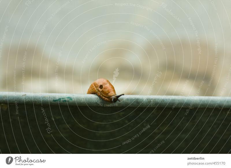 Schnecke ruhig Tier Garten Angst Wetter Park Schönes Wetter gefährlich Neugier Höhenangst Gelassenheit Stress Vorsicht Interesse geduldig