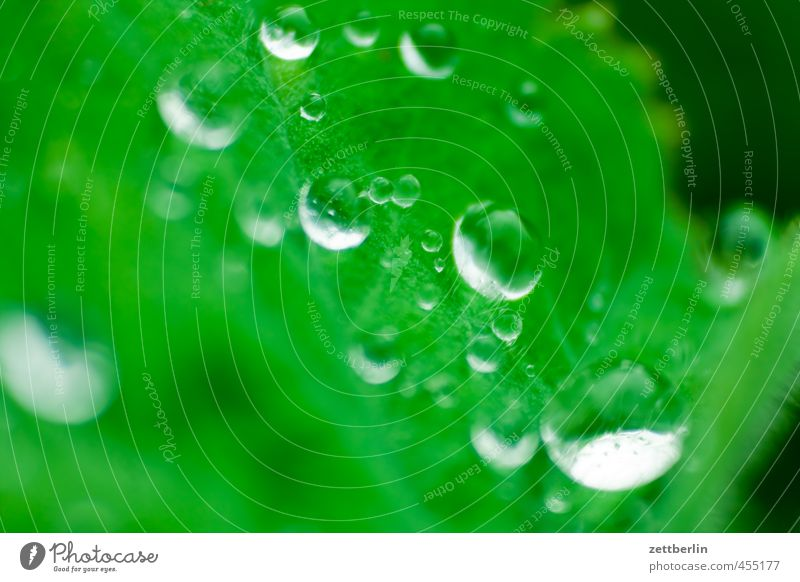 Das alljährliche Tautropfenmakro für carlitos exotisch Freude Glück schön Wellness Leben Erholung Meditation Garten Umwelt Natur Wasser Wassertropfen Pflanze