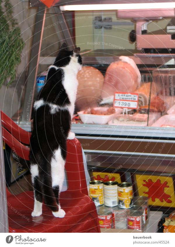 Katzenjammer Ernährung Ferne Katze Lebensmittel Italien Sehnsucht Ladengeschäft Appetit & Hunger Fensterscheibe Frustration Handwerker Kunde Momentaufnahme Enttäuschung Metzger Schinken