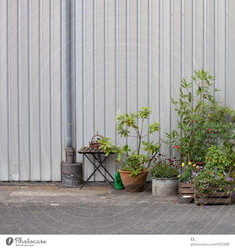 blühende industrie Wirtschaft Industrie Handel Frühling Sommer Pflanze Blume Sträucher Grünpflanze Topfpflanze Menschenleer Industrieanlage Mauer Wand Fassade