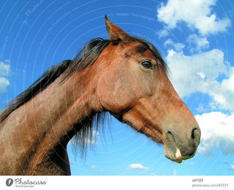 Pferdeportrait Himmel blau Wolken braun Verkehr
