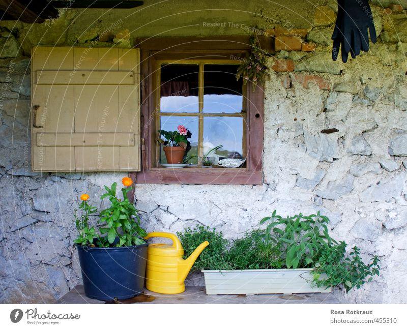 Stillleben mit Gießkanne Natur alt grün Pflanze Sommer Einsamkeit Haus gelb Fenster Berge u. Gebirge grau Blüte Garten Freizeit & Hobby Zufriedenheit authentisch