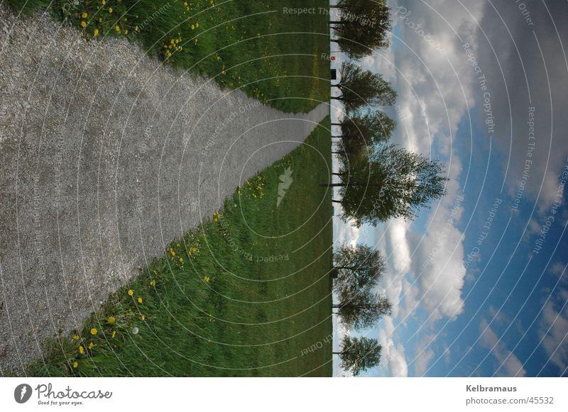 way up Baum Sommer Ferne Wiese Wege & Pfade Linie Hochformat Wolkenhimmel