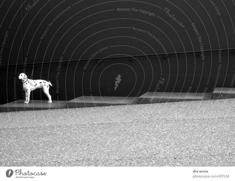 superdog Einsamkeit Hund warten Treppe Fototechnik Dalmatiner