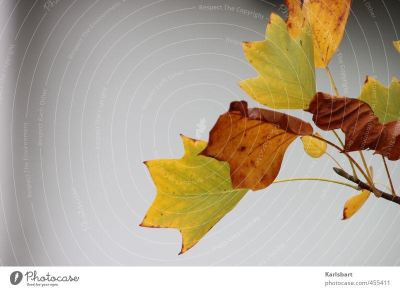 herbsteln. Gesundheitswesen Umwelt Natur Pflanze Herbst Klima schlechtes Wetter Nebel Baum Blatt Garten Park Wald Stadtrand Mauer Wand grau Bewegung Farbe