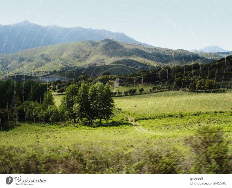 Grüne Berglandschaft Baum ruhig Ferne Wiese Berge u. Gebirge Korsika