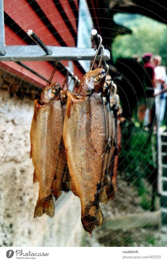 Geräucherte Forelle Bachforelle Regenbogenforelle Räucherforelle Angeln fangen hängen Ernährung geräuchert Fisch