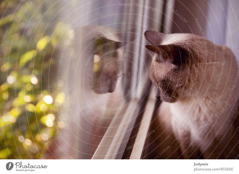 Beobachterin Katze Natur grün Pflanze Sommer Tier Umwelt Fenster Herbst Frühling grau Garten Wohnung Zufriedenheit Häusliches Leben warten