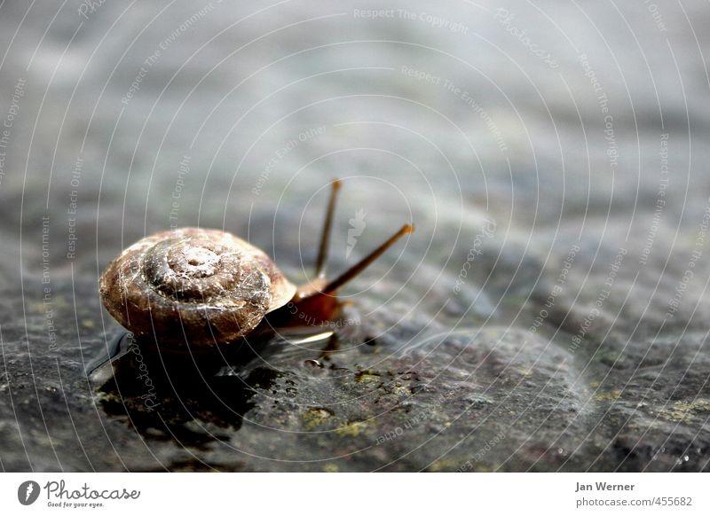 Locker bleiben! Erholung Tier Haus Straße Traurigkeit Herbst Stein Regen Häusliches Leben Schutz Ziel Glaube rennen Mobilität Geborgenheit Schnecke