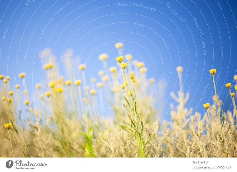 Summer Umwelt Natur Pflanze Schönes Wetter Blüte Wiese hell blau mehrfarbig gelb falsch künstlich sommerlich Farbfoto Außenaufnahme Abend Starke Tiefenschärfe