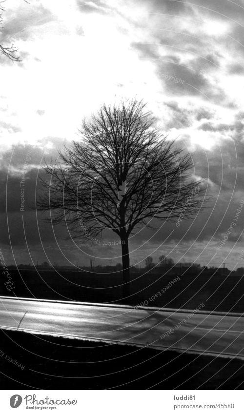 Einsamer Baum Straße einzeln Niederrhein Emmerich