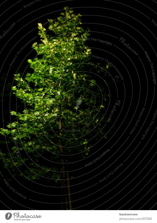 Grün bei Nacht Baum grün ruhig Laubbaum