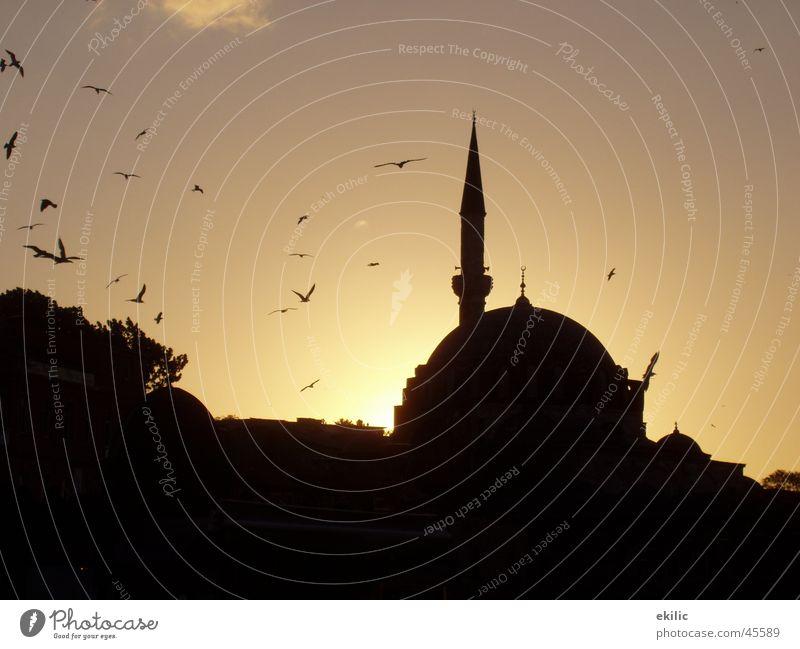 Istanbul Türkei Moschee Islam Sonnenuntergang Erfolg Himmel