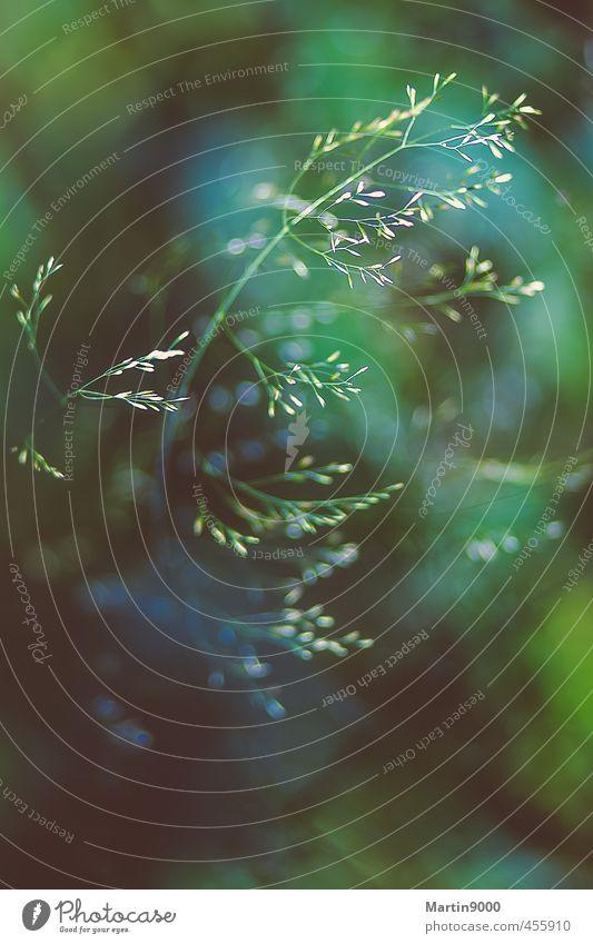 Tief im Wald Umwelt Natur Pflanze Gras Wildpflanze grün türkis weiß Zufriedenheit träumen Farbfoto Außenaufnahme Menschenleer Textfreiraum oben