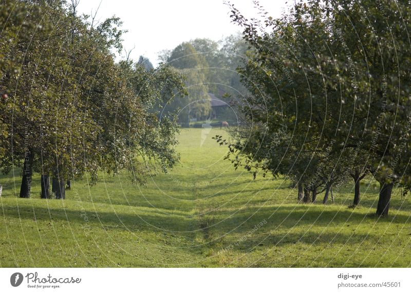 Streuobstallee Wiese Baum Streuobstwiese Gras Allee Stimmung Wege & Pfade Ferne
