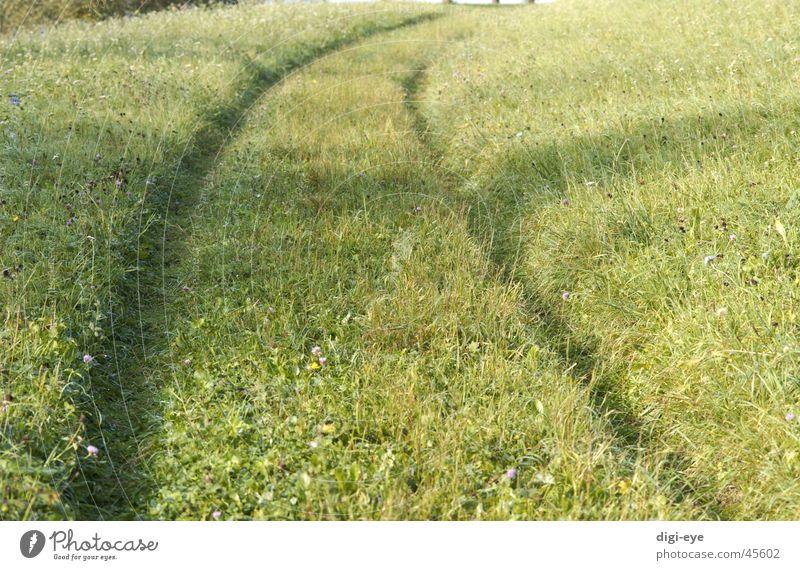 Wiesenweg Gras Wege & Pfade Stimmung Unendlichkeit Fußweg