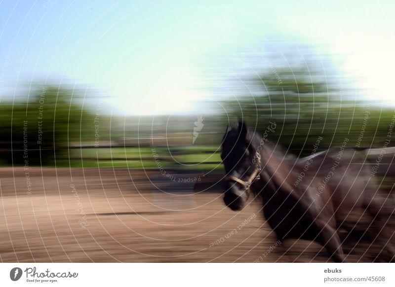 Nero Pferd Geschwindigkeit mehrens