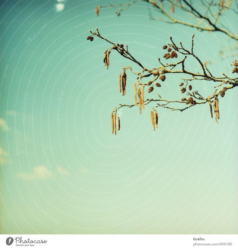 Restbestand Umwelt Natur Pflanze Himmel Frühling Baum Blühend Wachstum frisch wild blau braun Idylle ruhig Wandel & Veränderung Farbfoto Außenaufnahme