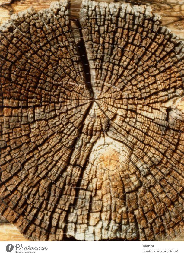 Ausgelaugt alt Baum Holz