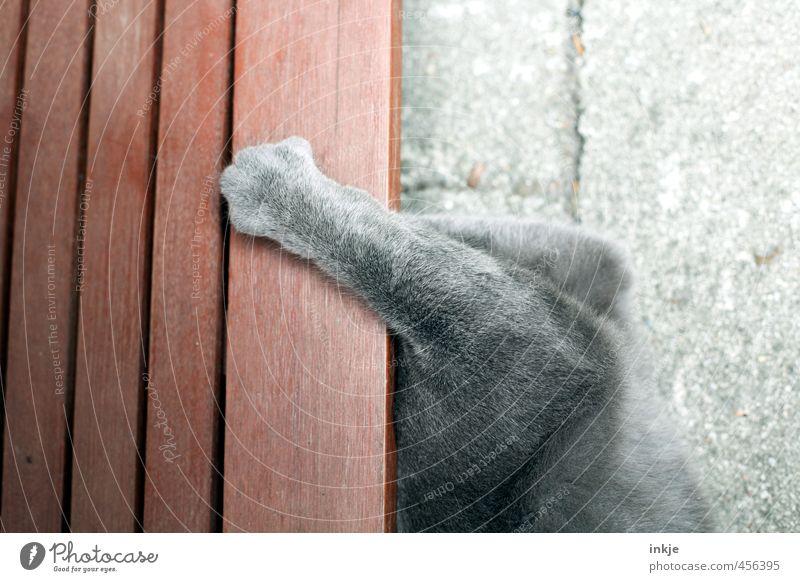 halbstark Katze Tier Gefühle grau liegen braun Kraft wild Schutz festhalten verstecken unten Jagd Haustier machen Pfote