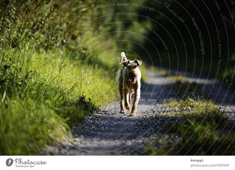 haarig | pelzig Hund Natur Pflanze grün Sommer Sonne Freude Tier schwarz Umwelt Wärme Bewegung Wiese Frühling natürlich grau