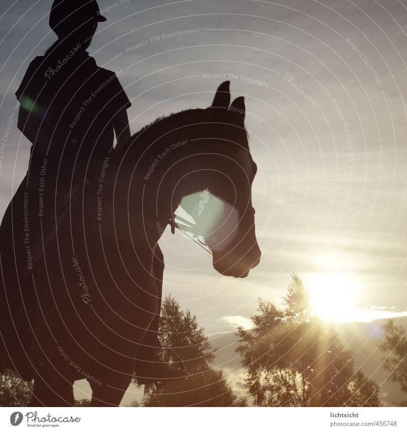 Lichtritt Reitsport Reiten feminin 1 Mensch Natur Landschaft Himmel Schönes Wetter Baum Pferd Tier erleben Dressurreiten Anschnitt Reiter Reiterhelm Reiterhof