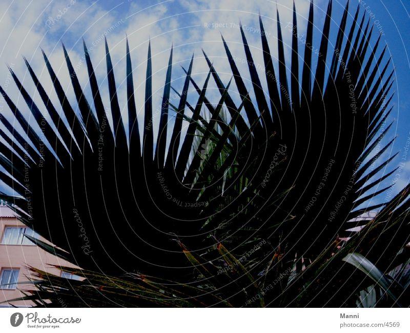 Kontrast Himmel Blatt Wolken Palme Baum Palmenwedel