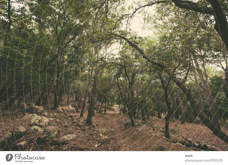 Durchweg Ferien & Urlaub & Reisen Umwelt Natur Landschaft Urelemente Erde Baum Felsen Wege & Pfade Stein trist trocken braun grün Einsamkeit Mallorca mediterran