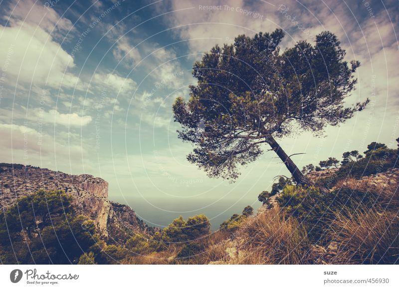 Natürliche Neigung Ferien & Urlaub & Reisen Tourismus Sommer Meer Insel Umwelt Natur Landschaft Pflanze Urelemente Erde Himmel Wolken Horizont Wind Baum Wiese