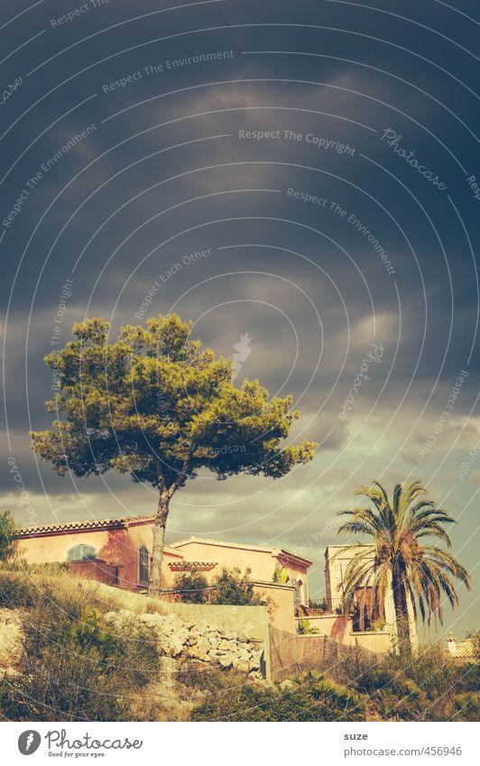 Kiefer oder Palme Himmel Natur Ferien & Urlaub & Reisen Sommer Baum Landschaft Wolken Haus Wärme Architektur Gebäude Wetter Freizeit & Hobby Idylle