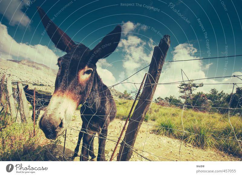 Eselflüstern Himmel Natur Ferien & Urlaub & Reisen Sommer Landschaft Wolken Tier Umwelt Wiese Kopf trist niedlich Neugier Spanien trocken Weide