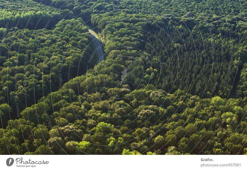 Ausweg Landschaft Sommer Baum Wald Verkehrswege Straßenverkehr frech oben grün Abenteuer Einsamkeit Horizont Mobilität Natur Güterverkehr & Logistik