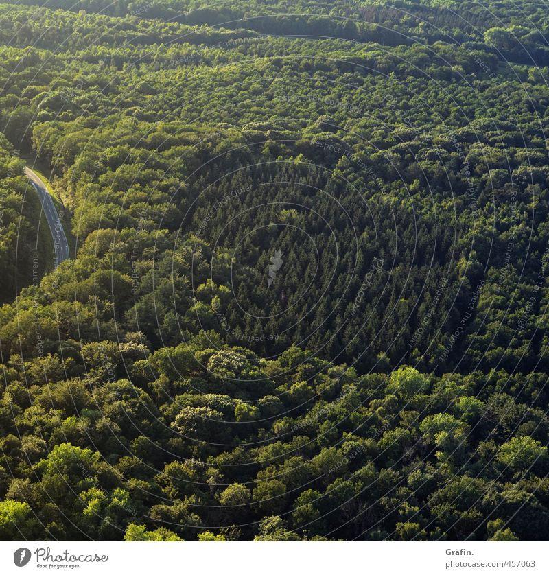 Erstes 2014 | Mischwald Natur grün Sommer Baum ruhig Ferne Wald Umwelt Straße Abenteuer Unendlichkeit Laubwald
