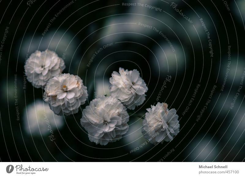 Kleine Blüten Natur schön weiß Pflanze kalt Garten Gartenpflanzen