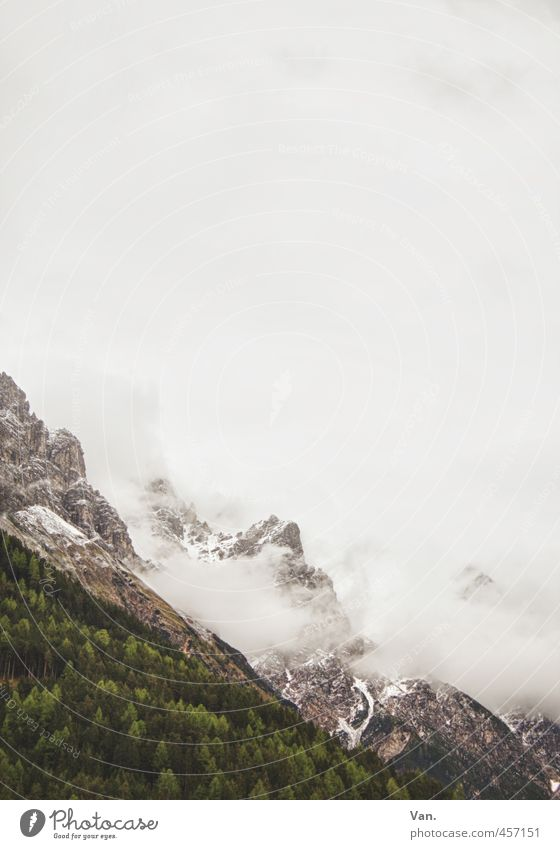 Zuckerwatteberge Berge u. Gebirge Natur Landschaft Pflanze Himmel Wolken schlechtes Wetter Nebel Schnee Baum Wald Felsen Alpen kalt grün Farbfoto