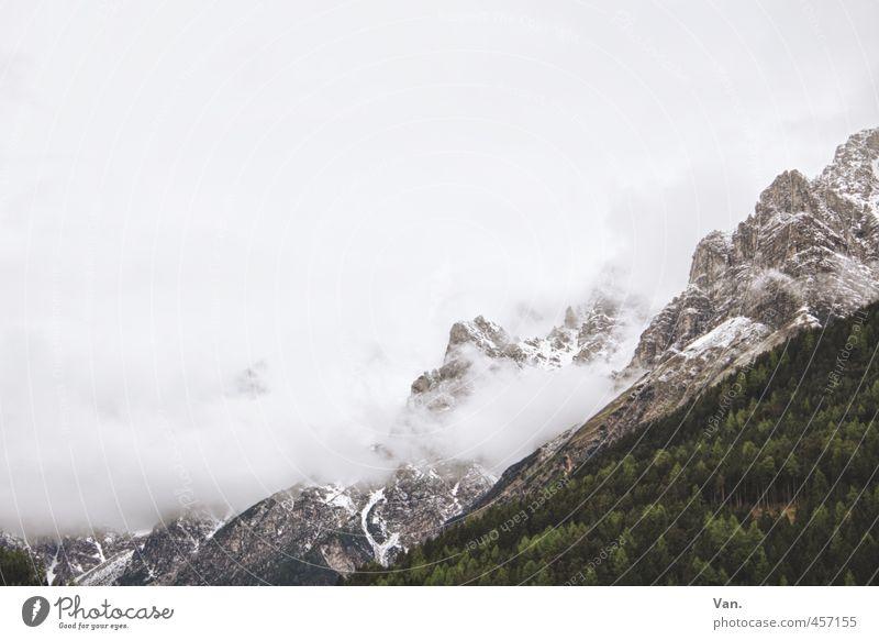 Zuckerwatteberge² Berge u. Gebirge wandern Natur Landschaft Pflanze Himmel Wolken schlechtes Wetter Nebel Schnee Baum Wald Felsen Alpen kalt grau grün weiß