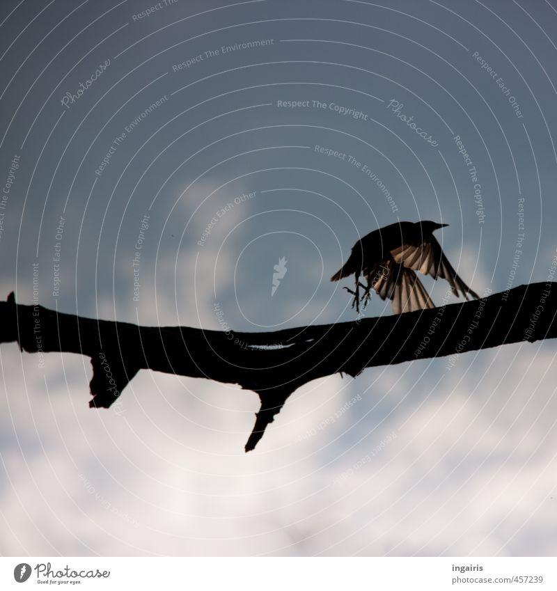 Fly Himmel Natur blau weiß Wolken Tier schwarz Freiheit fliegen Vogel Stimmung Horizont Angst Wildtier ästhetisch gefährlich