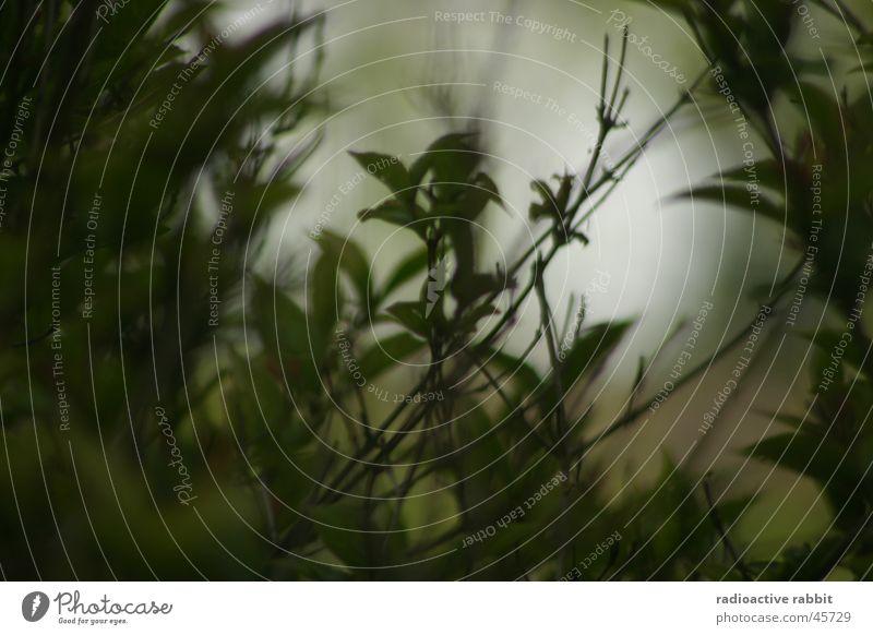 Green World Pflanze Sträucher