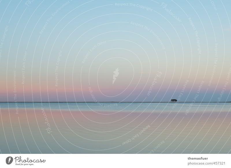 dream on Ferien & Urlaub & Reisen Ferne Strand Meer Insel Natur Landschaft Erde Luft Wasser Wolkenloser Himmel Horizont Sommer Baum Küste Bucht Ostsee schön