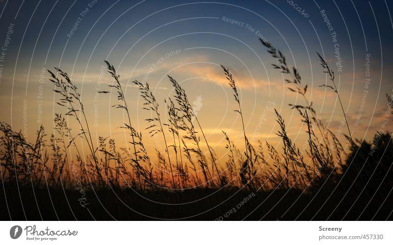 Grasland Natur Landschaft Himmel Wolken Sonnenaufgang Sonnenuntergang Sommer Pflanze Sträucher Wildpflanze Wiese Warmherzigkeit Romantik schön Gelassenheit
