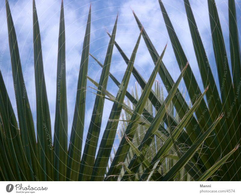 Palmenblätter Sonne Ferien & Urlaub & Reisen Blatt Süden