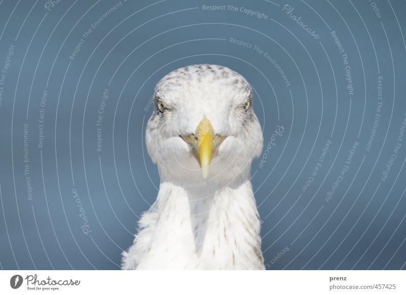 Urlaubsfoto Umwelt Natur Tier Sommer Schönes Wetter Wildtier Vogel 1 blau weiß Möwe Ferien & Urlaub & Reisen Ostsee Darß Farbfoto Menschenleer