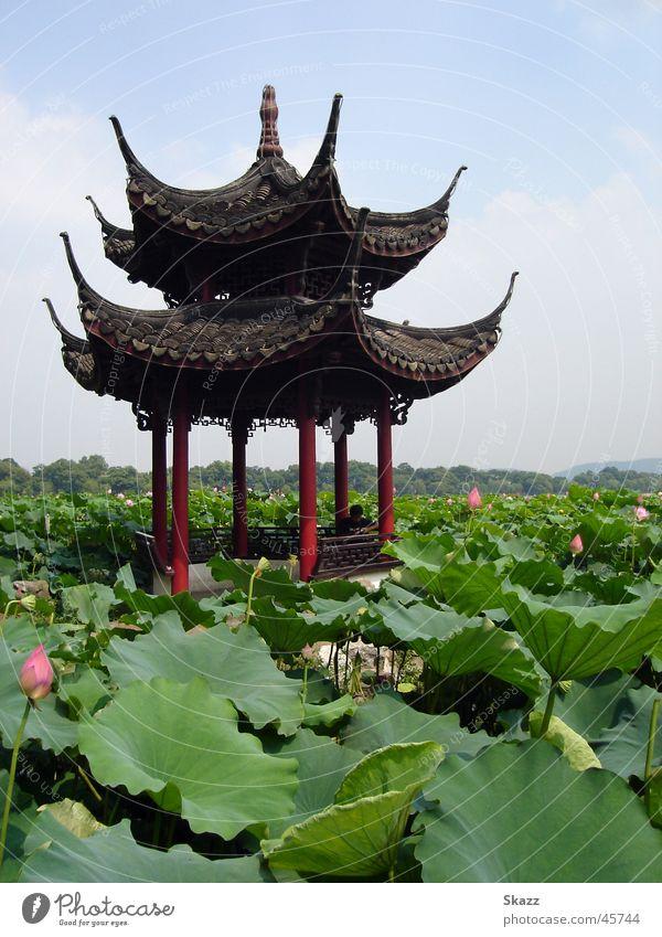 Pavillon im Lotusmeer Natur ruhig Erfolg Idylle Asien China Seerosen harmonisch Lotos Pavillon