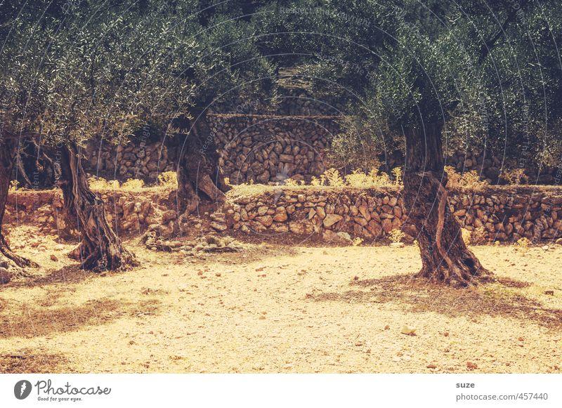 Trockenzeit Ferien & Urlaub & Reisen Sommer Umwelt Natur Landschaft Urelemente Erde Wärme Baum Mauer Wand Wege & Pfade alt trist trocken grün Mallorca